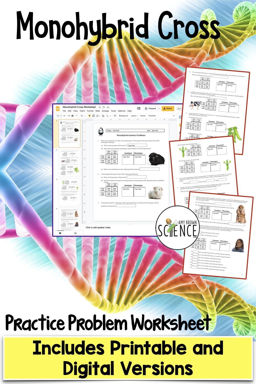 Genetics Punnett Square Monohybrid Practice Printable And Digital Versions In 2021 Genetics Practice Problems Teaching Materials Teaching