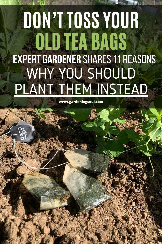 183d57aeb3178a2dedc44b461b3a4b43 - Expert Gardener Plant Food How To Use