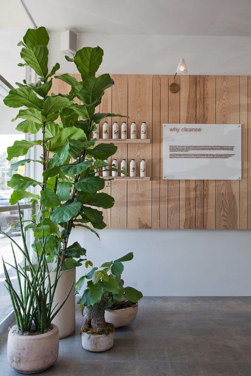 Home Steamed Not Fried Interior Design Plants Interior Plants Plant Design