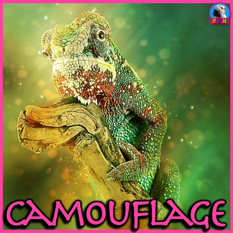 Camouflage Animal Adaptations