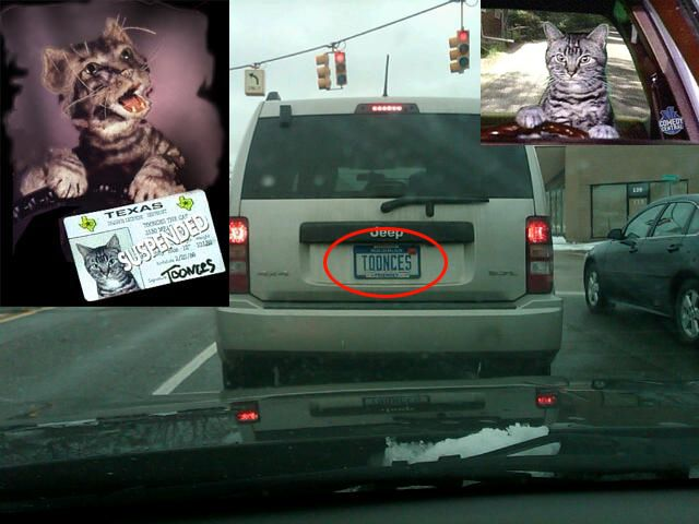 Toonces The Driving Cat Funny Cats Funny Humor