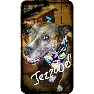 Jezzabel Tiny Bug Dog Rescue Inc Palm Bay Florida Pets Overstock Com Animal Society Animals