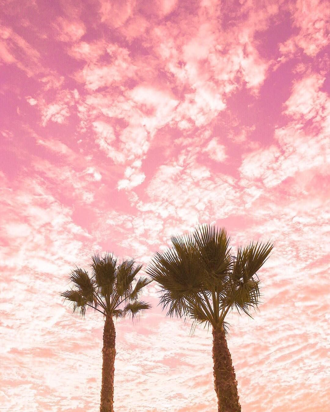 Drawing Bookcover Design: Pink Skies & Palm Trees