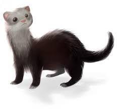 Resultado De Imagen Para Huron Dibujo Hurones Animales Mascotas
