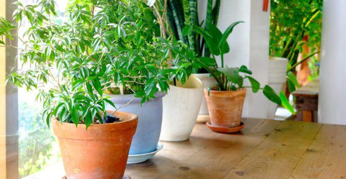 5 pokojových rostlin, které vyrábějí kyslík a nelze je zahubit