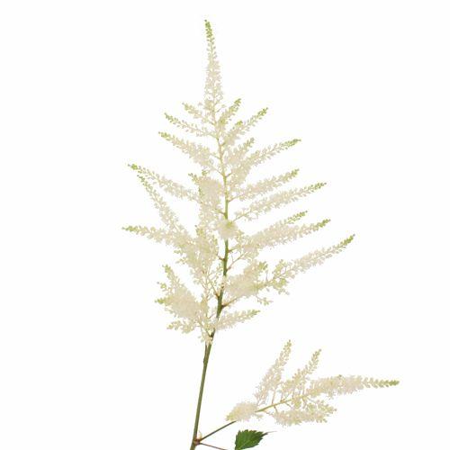White Astilbe Flower Fiftyflowers Com Astilbe Flower Astilbe Flowers