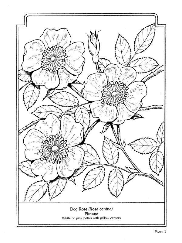 le langage des fleurs pdf