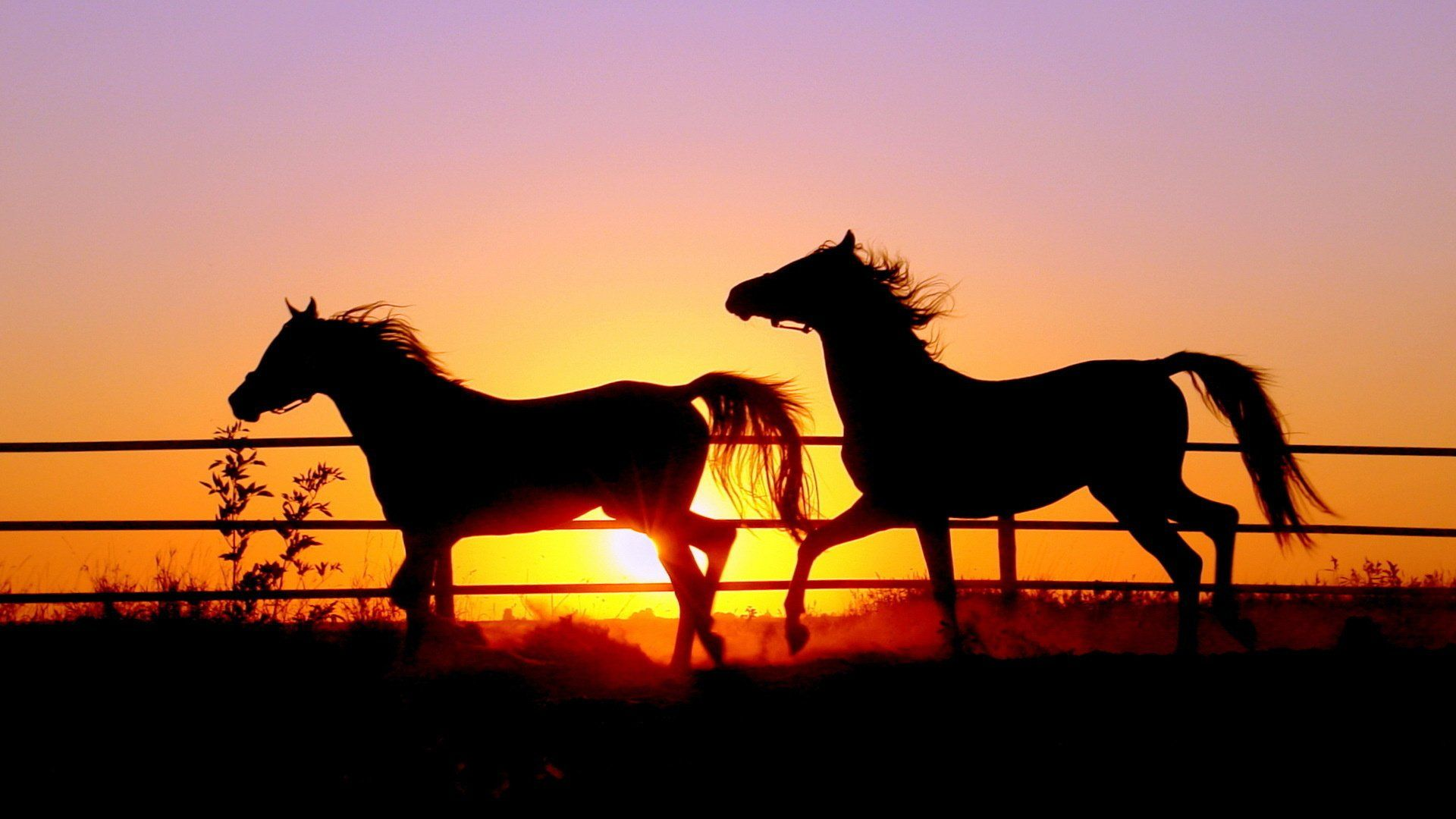 Must see Wallpaper Horse Iphone - 18400a3f2afd8331a4adc23cabd1a0b4  Graphic_48259.jpg