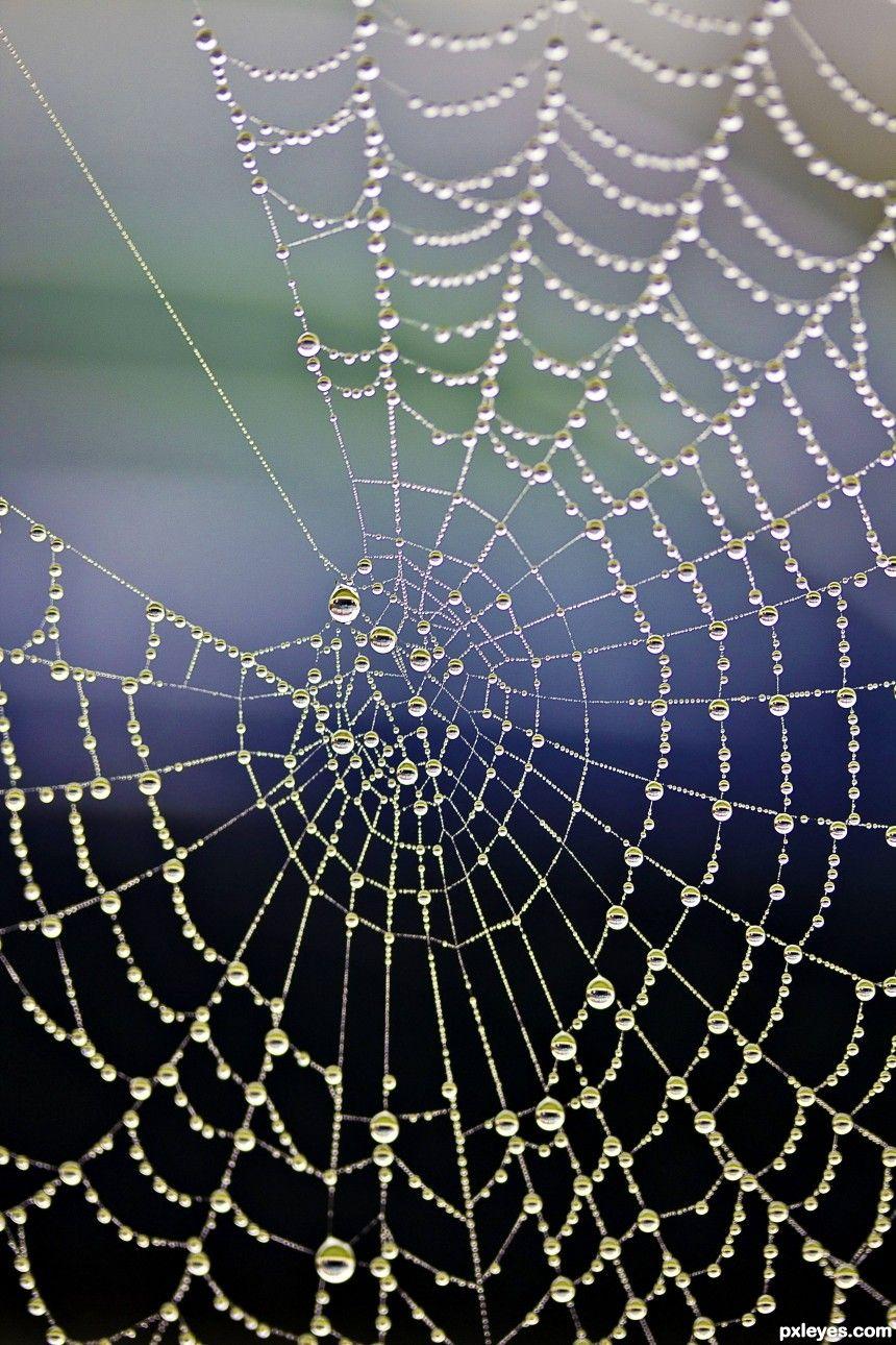 Eye on the web