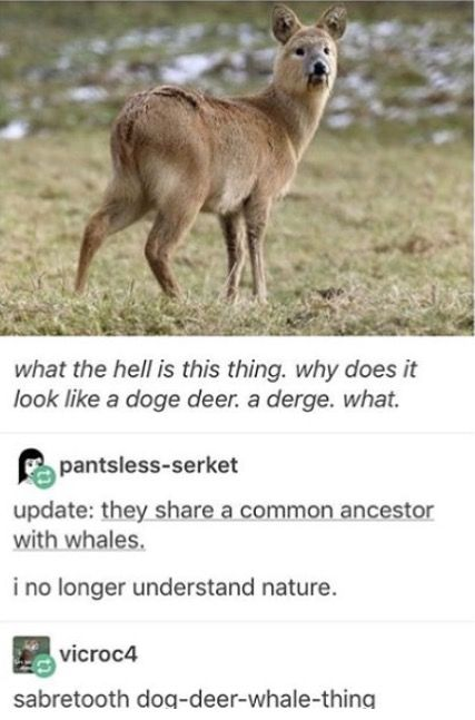 What Is Nature Memes Pinterest Funny Lol And Tumblr Funny