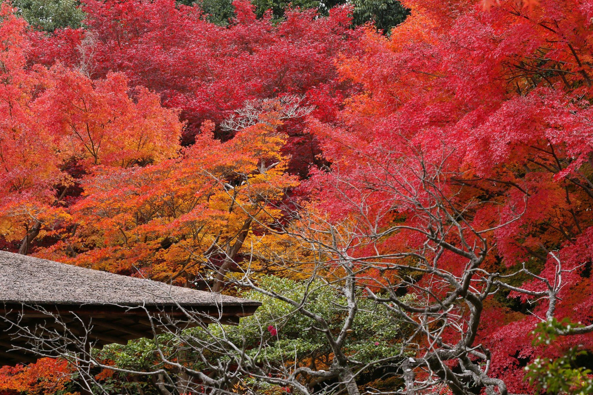 Tea House in Autumn by Takashi Imaoka on 500px