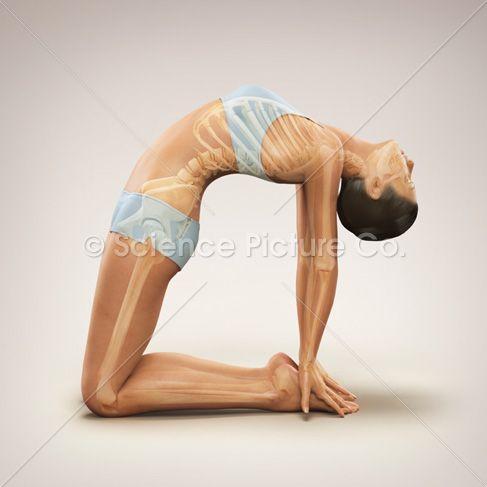 skeleton yoga poses - Google Search | anatomy | Pinterest