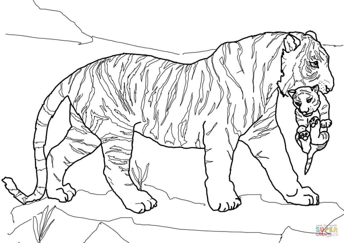 Tigers Coloring Pages Tiger Drawing Tiger Drawing For Kids Coloring Pages