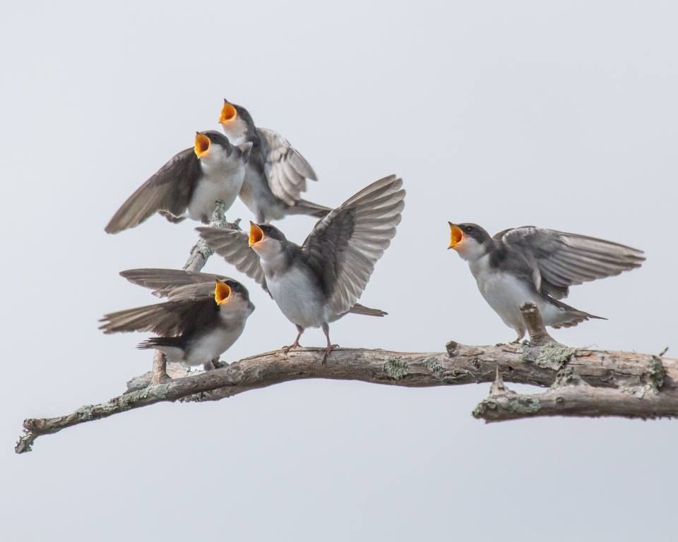 Birds all calling at once. Don't tell me Nature doesn't communicate!