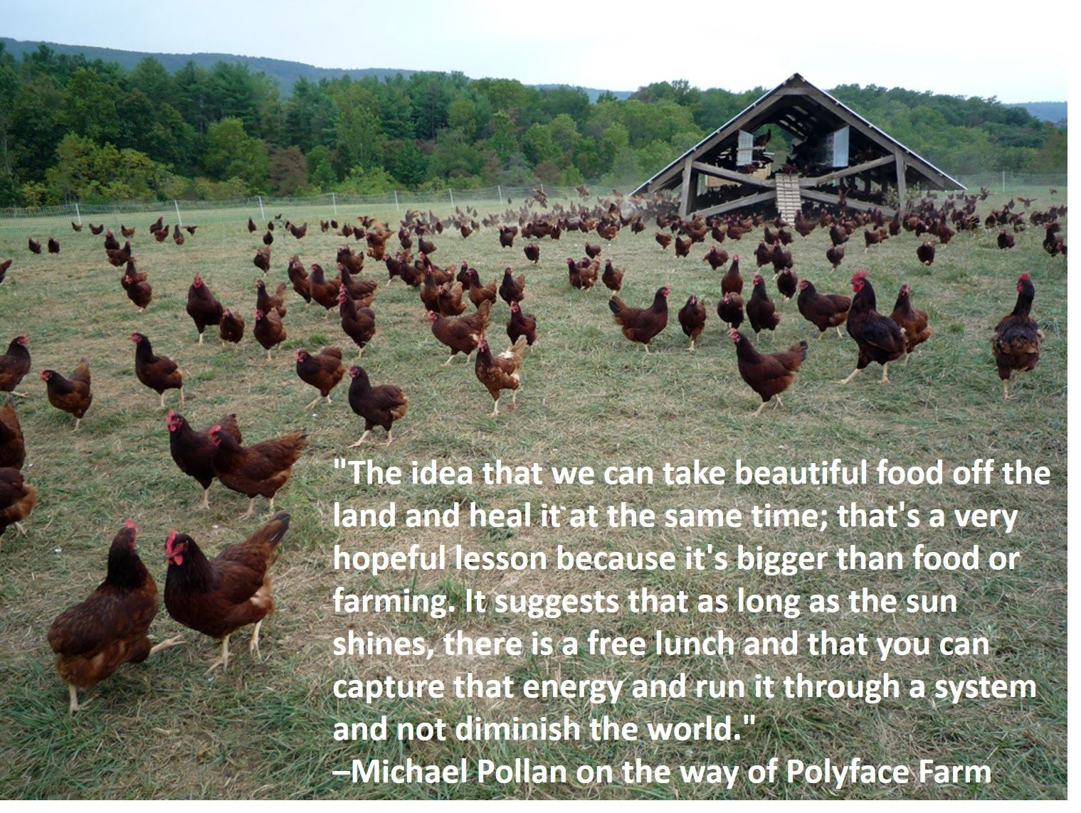 Quotes About Raising Chickens: Michael Pollan Quote About Polyface Farm