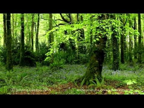 ▶ 8 Hours Relaxing Nature Sounds for Studying-Birdsong Relaxation-Bird Singing - YouTube