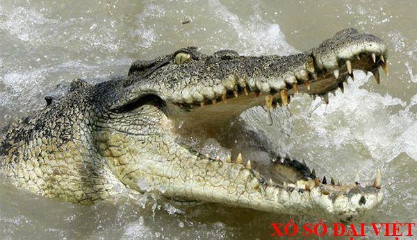 nằm mơ thấy cá sấu đánh số gì