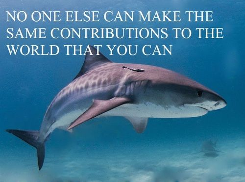 Funny Shark Quotes Quotesgram By Quotesgram Shark Fishing Shark Facts Shark