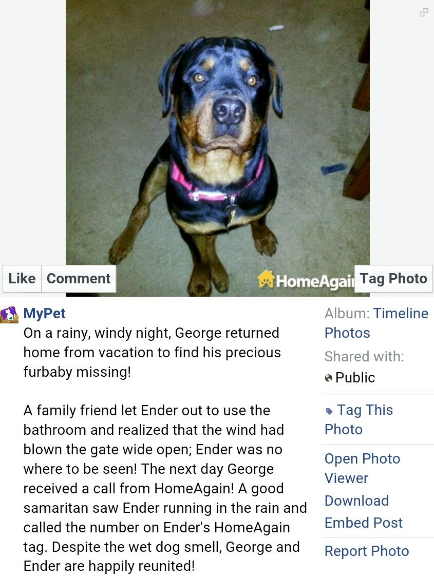 A Reunion Story About A Lost Dog And A Home Again Tag And A Microchip Https Www Facebook Com Mypetusa Photos A 27157 Losing A Dog Losing A Pet Pet Hacks