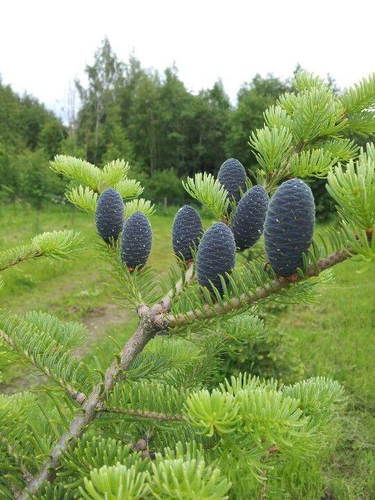 Funny cones
