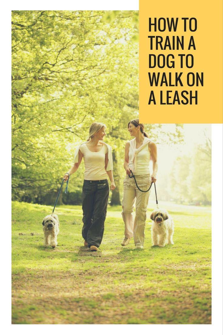 Do you know how to train a dog to walk on a leash dog