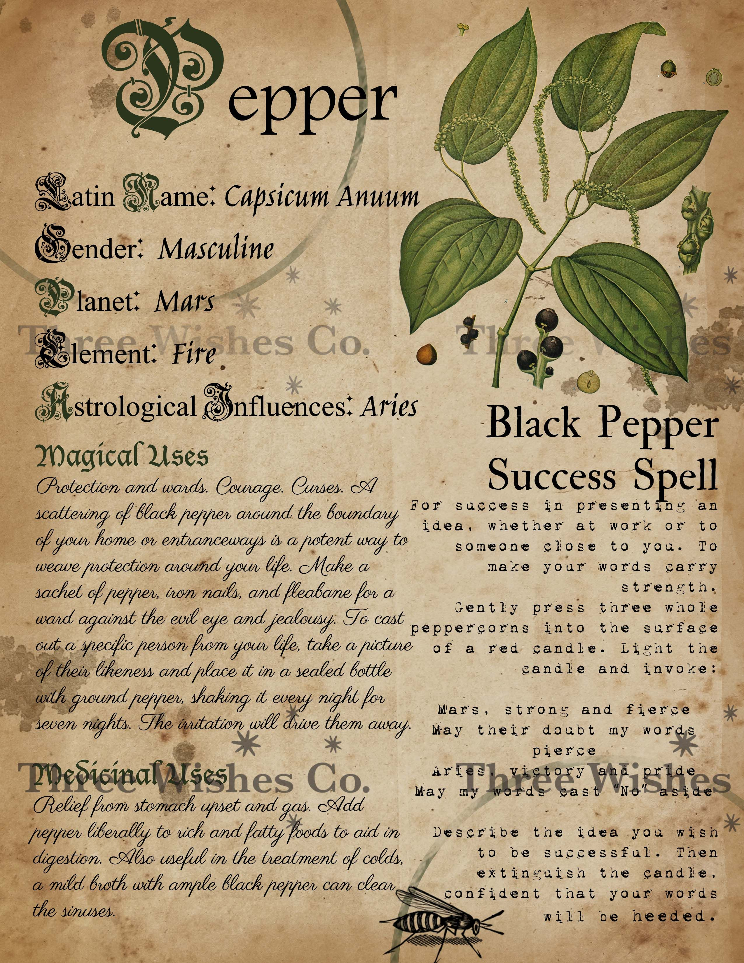 Pepper. Witch Grimoire. Book of Shadows. Book of S