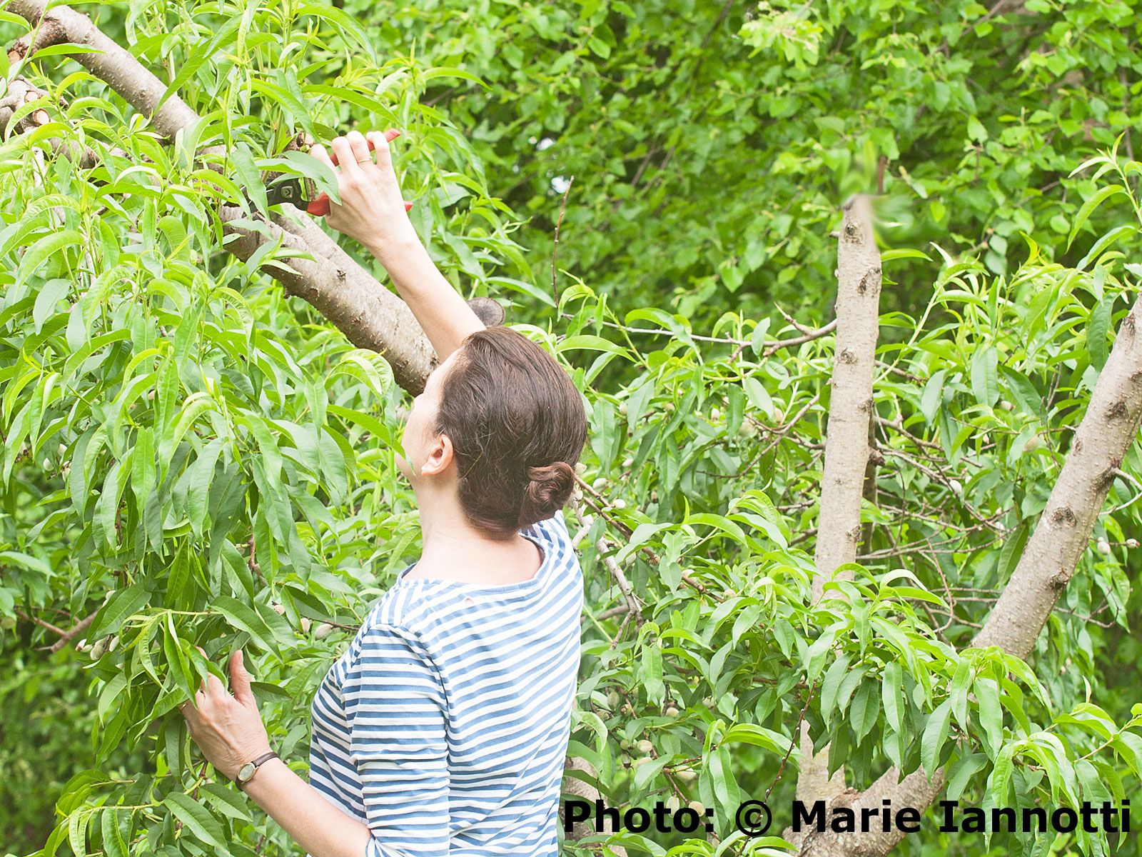 as lovely as it is to be able to pluck fresh fruit off a tree in