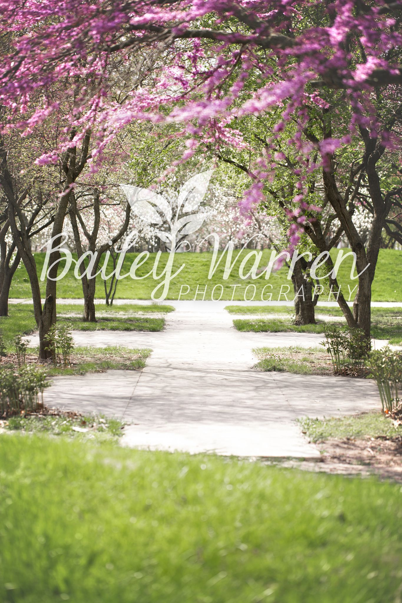 Photography Prop Digital Backdrop for Photographers - Spring Flowering Trees Digital Backdrop #backdropsforphotographs