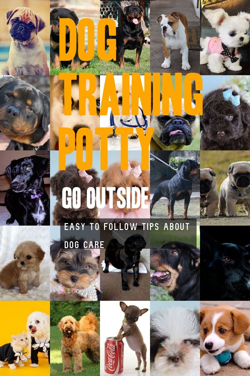 A Fantastic Dog Training Potty Go Outside Guide For You Find Out More At The Image Link In 2020 Dog Potty Training Dog Training Basic Dog Training