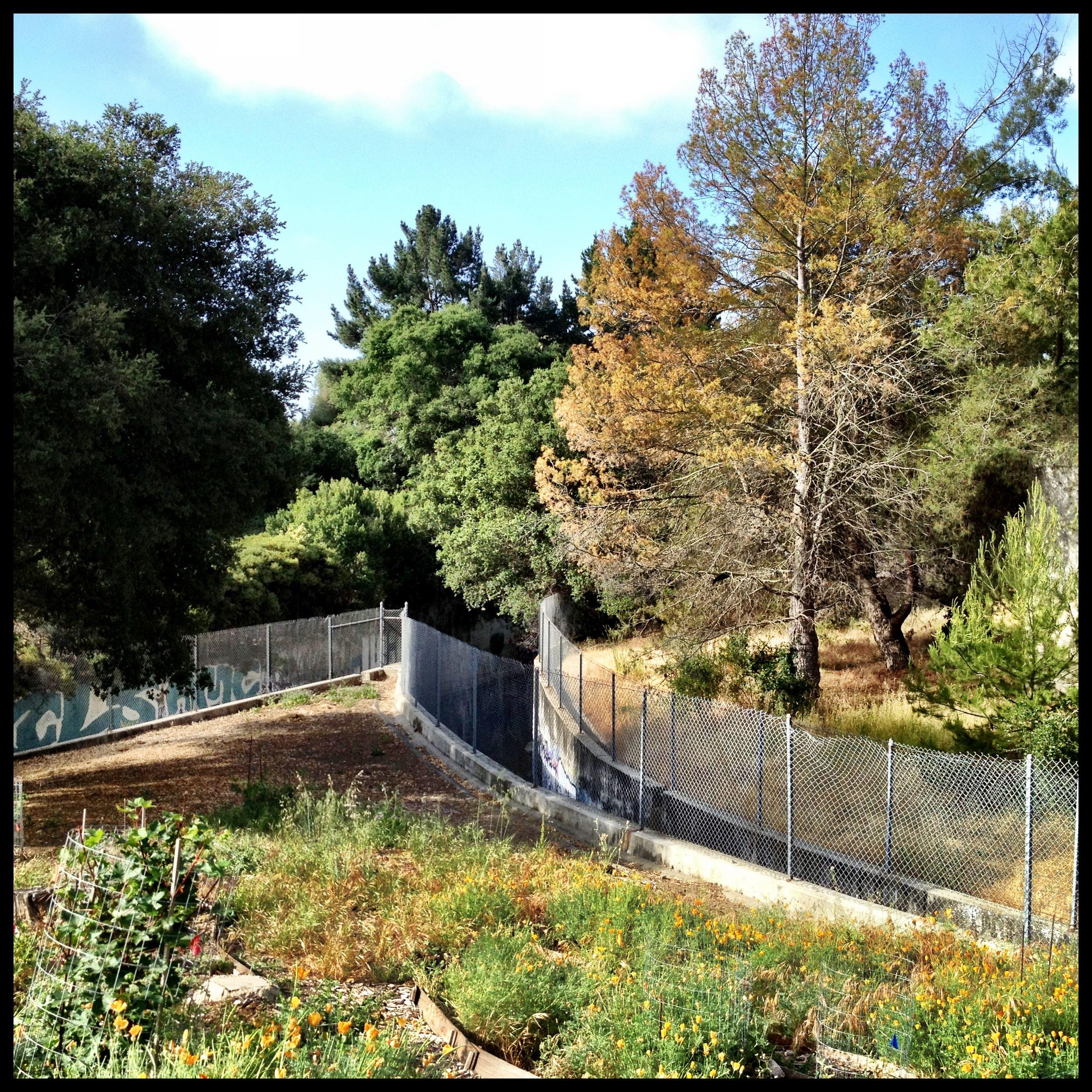 cv castrovalley cvlegends baytreespark Castro valley