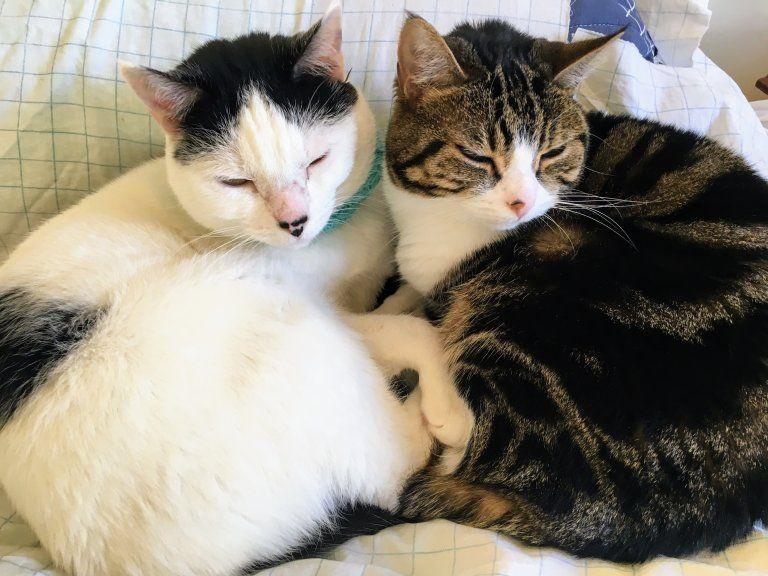 Raw Cat Food Recipe Keto Kitties With Allergies Have Butter Will Travel Recipe Raw Cat Food Recipes Cat Food Raw Pet Food