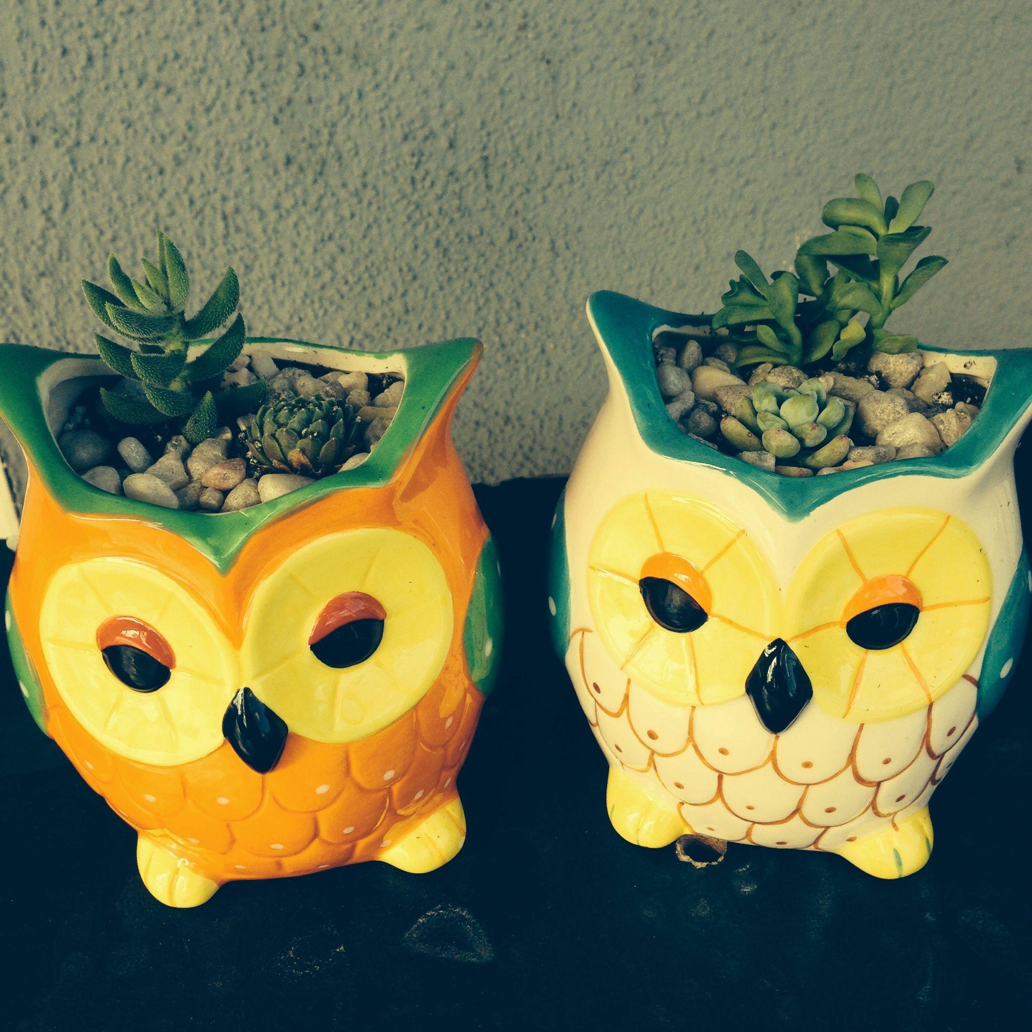 Owl plant pots fr daiso.