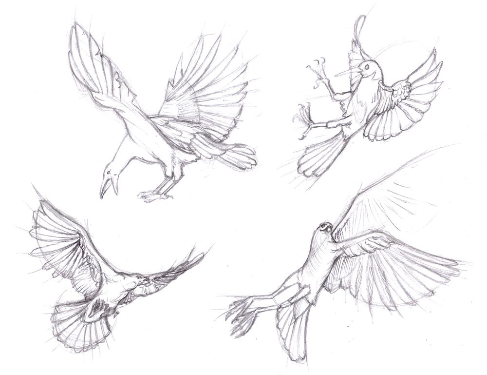 How To Draw Bird Wings - Google Search