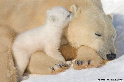 """""""I love you, Mommy"""""""
