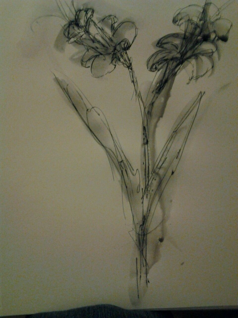 Day invented daffodils pen and water min painting studies
