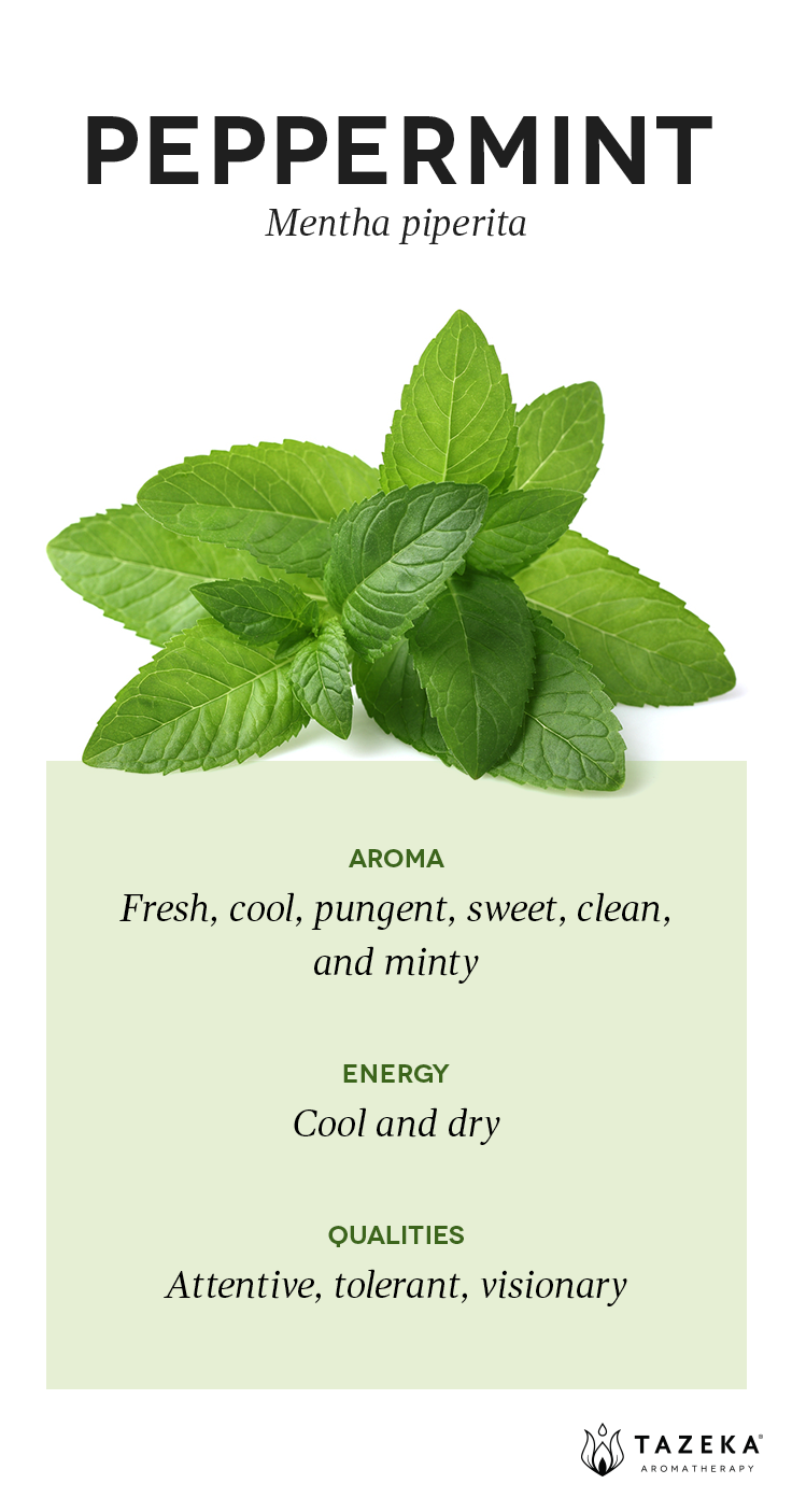 Peppermint Profile | (Source: Aromatherapy For the Healing Spirit - Gabrial Mojay) #Tazeka