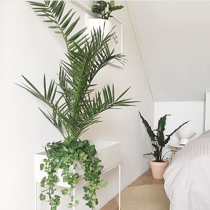 ferm LIVING Plant Box in light grey  https   www.fermliving. 4771eba347cca