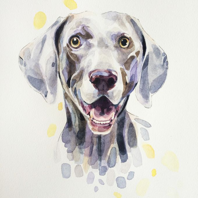 Watercolor dog portrait - Grinning Weimaraner, Watercolour, 16in x 12in – Watercolor dog portrait
