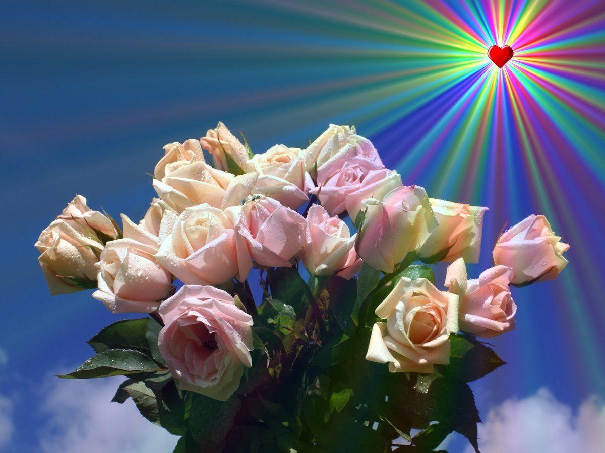 Обои, открытка роза солнышко