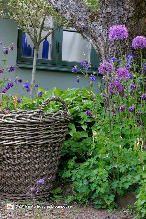 lavender and myrrh Cottage garden, Country gardening