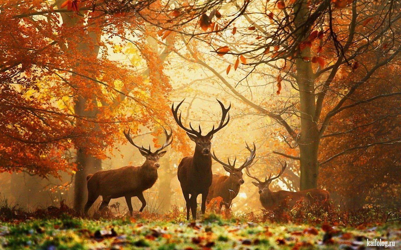 Красивые фотографии природы (60 фото) | Обои с животными ...