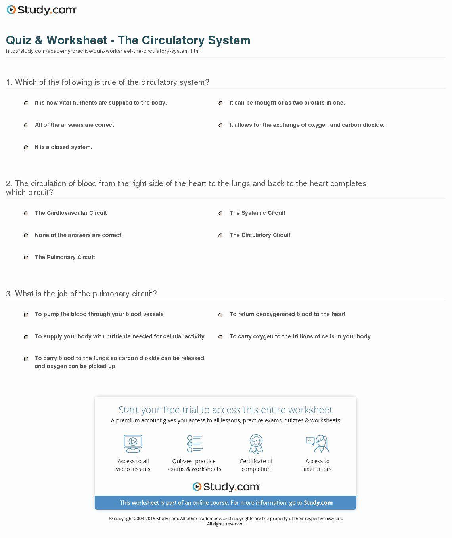 50 Circulatory System Worksheet In