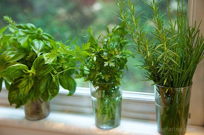 How To Grow Pest Free Healthy Basil