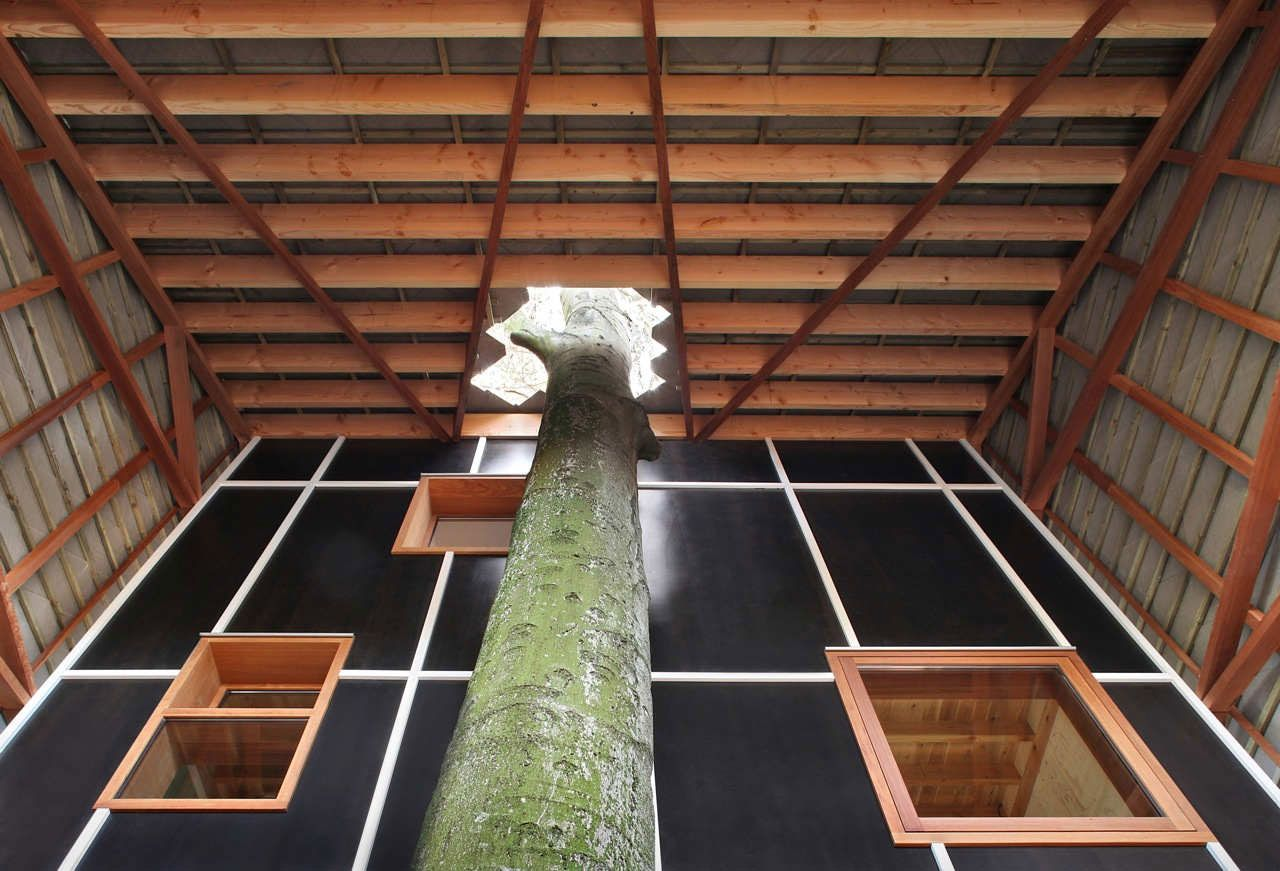 An Incredible House Built Around A Growing Tree Growing tree