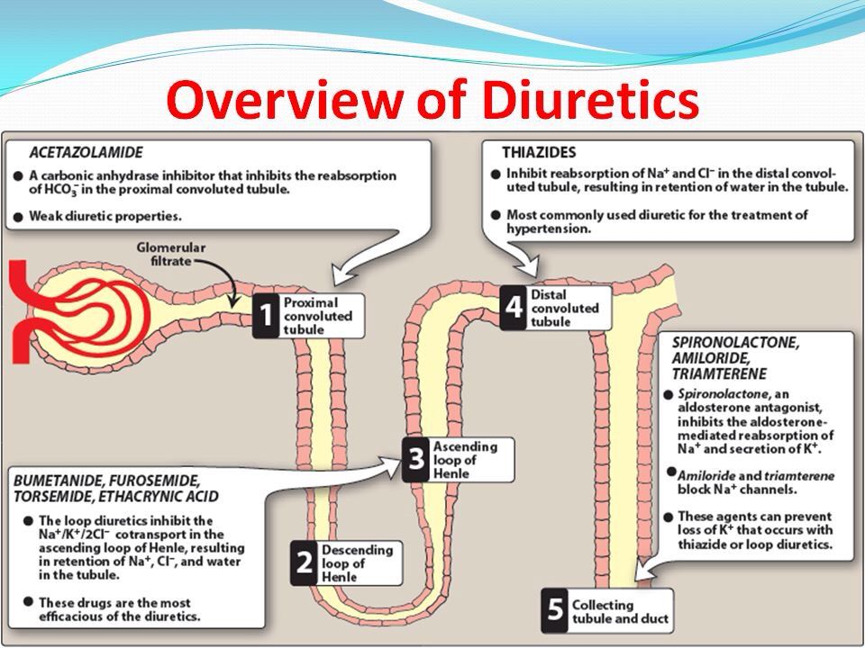 diuretics and their sites of function. nursing school | nurse, Skeleton