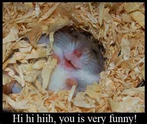 Image Search Results for funny hamsters