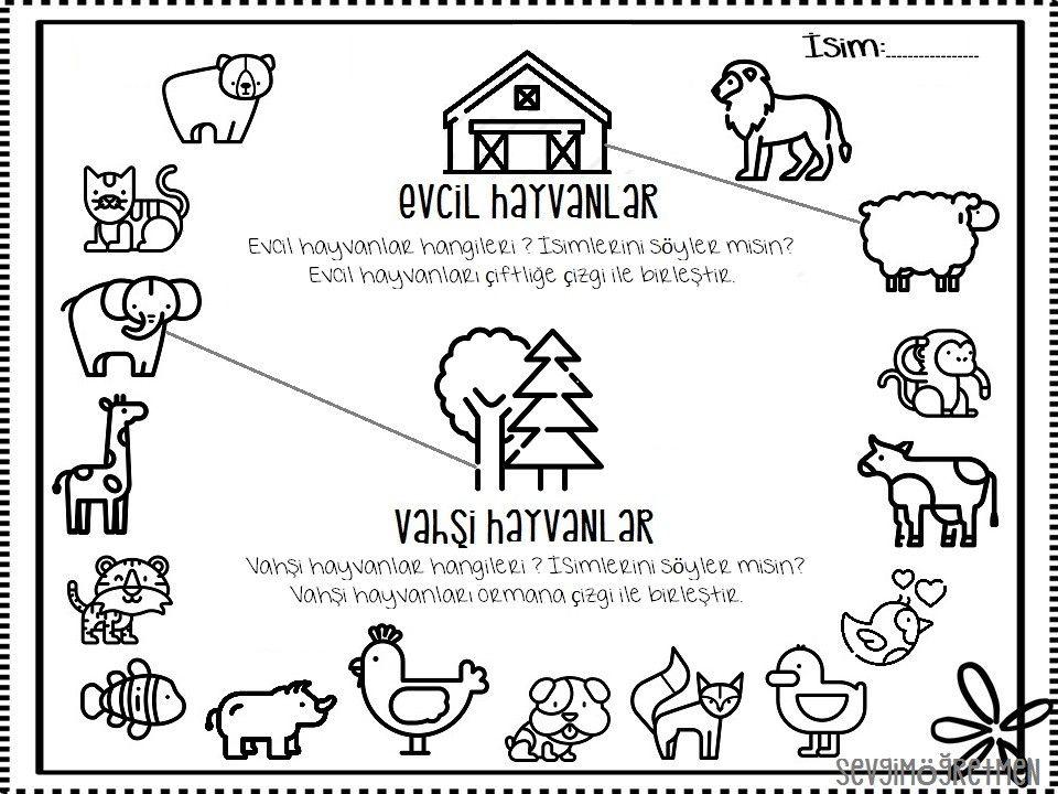 Evcil Hayvanlar Ve Vahsi Hayvanlari Ogrenirken Hazirladigim Calisma Sayfasi Sevgimogretmen Goruntuler Ile Hayvanlar
