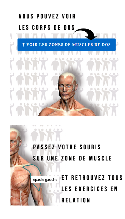 Grâce à la carte du corps humain sélectionnez les muscles que vous  souhaitez travailler et commencez 7c6c9e07ebd