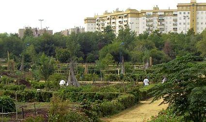inner city urban gardening ideas