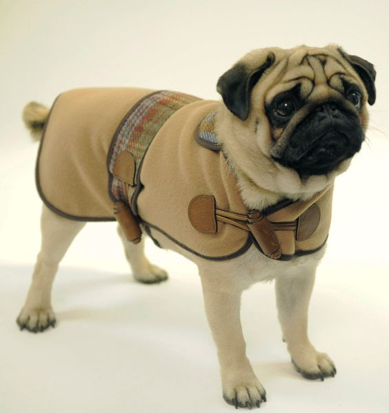 Elegant And Expensive Looking Dog Clothing At Affordable Prices